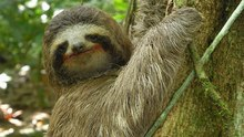 Team Sustainability Sloths's avatar